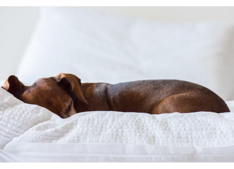 Comment choisir ses draps pour un lit ultra douillet ?